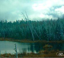 Evergreens of Northern Ontario by elisehendrick