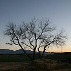 Tree at sunset by D. Isbell
