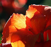 Early Morning Bloom by Matthew Stewart