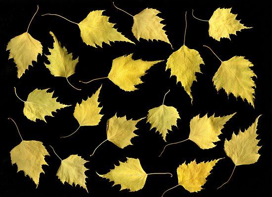 When Leaves Grow Old by Christian Slanec   FineArt Studio