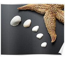 Shells & Starfish Poster