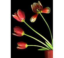 Pot O' Tulips Photographic Print