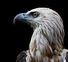 philippine eagle by gashwen