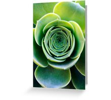 Green houseleek     Greeting Card