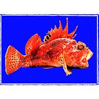 Scorpian Fish by Rochelle Boardman
