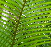 fern leaf by Maike