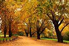 Bega during autumn by Darren Stones