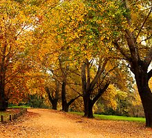 Bega during autumn by Darren Stones