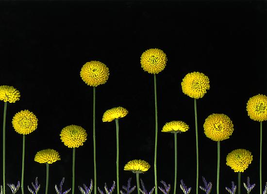 Field Of Gold by Christian Slanec   FineArt Studio
