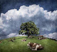 15 cows on the meadow by Kurt  Tutschek