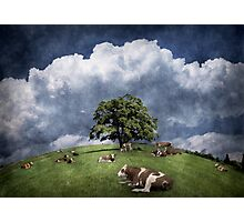 15 cows on the meadow Photographic Print