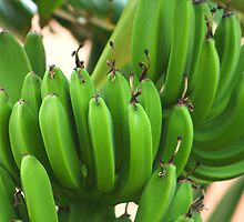Green Bananas by jdmphotography