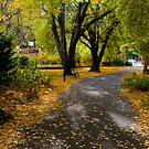 Autumn Colour - St Davids Park by Anthony Davey