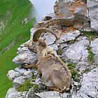 Swiss Mountain Ibex by itchingink