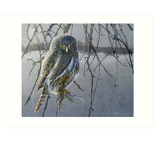 open country hunter: northern pigmy owl  Art Print