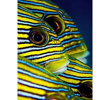 Eyes and Stripes Photographic Print