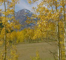 Aspen at Maroon Bells by Daniel Doyle