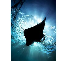 Manta Silhouette Photographic Print