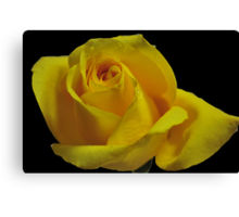 The Breast Cancer Rose Canvas Print