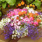 Last flourish of summer by GEORGE SANDERSON