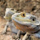 Bearded Dragon by Mark Durant