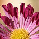 spoon chrysanthemum by picketty