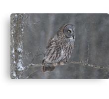 Perching Owl... Canvas Print