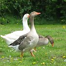 Geese on the Green by Susan E. King