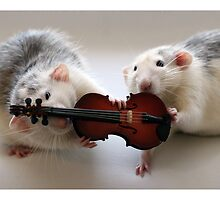 Playing the violin together :) by Ellen van Deelen