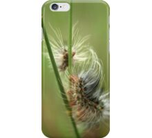 Almost Dreamy... Fire Worm From The Free State, South Africa iPhone Case/Skin