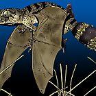 Flying Gecko by Jumbola