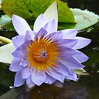 drooping lily by harveyincairns