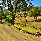 Another Country Road by Terry Everson