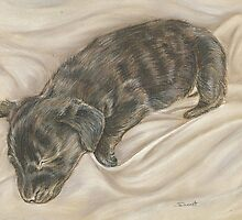 puppy pastel portrait by jdportraits