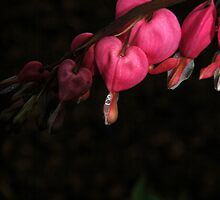 Tears... by LindaR