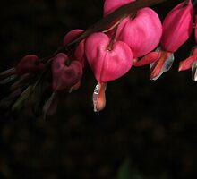 Tears... by LindaR