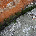 Lichen Rock - Flinders Island, Tasmania by Eve creative photografix