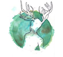 young stag Photographic Print