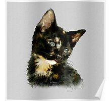 Susie: Black and tan Kitten Poster