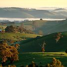 Rolling Hills, Dollar Gippsland by Joe Mortelliti