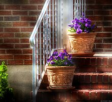 Viola Pansies by Mike  Savad