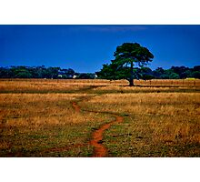 """""""The Sheep Track"""" Photographic Print"""