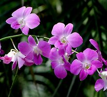 Deep Purple Orchids by Dave Lloyd