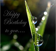 Happy Birthday to you... by Mary Trebilco