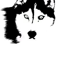Black and White Husky by Rachel Counts