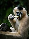 White Cheeked Gibbon by SD Smart