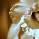 flower 32 by Kittin