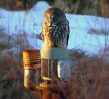The Owl by babyangel