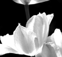 Spring In Black And White Sticker