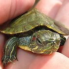 Baby Turtle by Taylor Russell